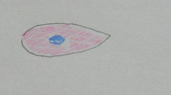 ブドウ膜2.jpg