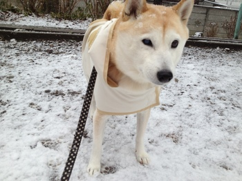 takana_0130雪.JPG