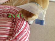 0530タカナ_スリスリ.jpg